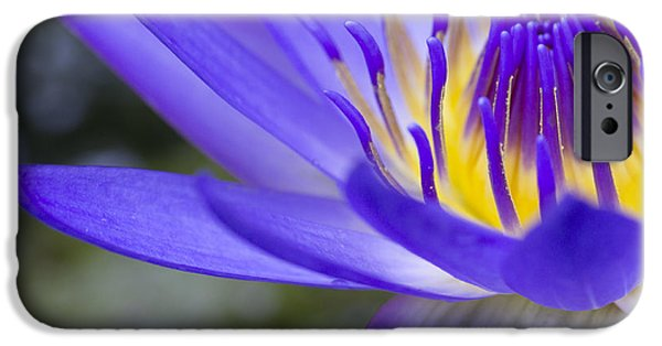 Nature Center Pond iPhone Cases - Summer Abundance iPhone Case by Priya Ghose