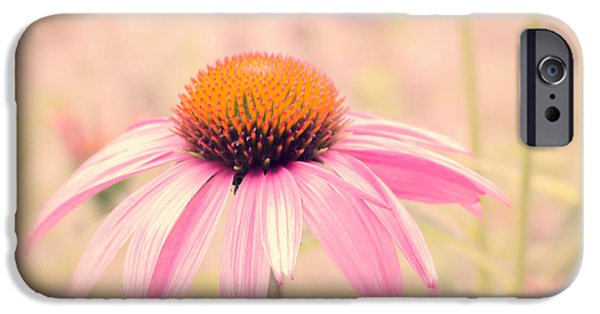 Cone Flower iPhone Cases - Summer Always Comes Anyway iPhone Case by Bob Orsillo