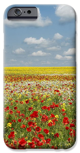 Crops iPhone Cases - Summer Colours iPhone Case by Tim Gainey