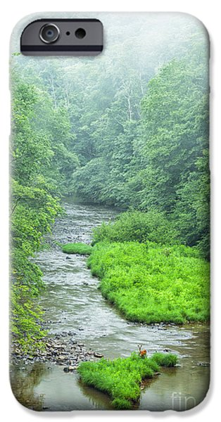 Trout Stream Landscape iPhone Cases - Summer Deer in River iPhone Case by Thomas R Fletcher