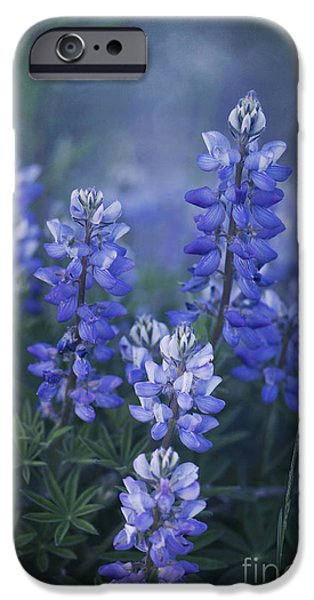 Flora iPhone Cases - Summer Dream iPhone Case by Priska Wettstein