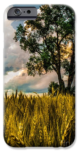 A Summer Evening iPhone Cases - Summer Evening After A Rain iPhone Case by Michael Arend