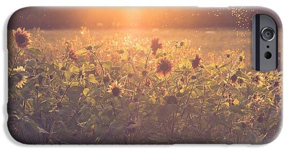 Pollen iPhone Cases - Summer evening iPhone Case by Chris Fletcher