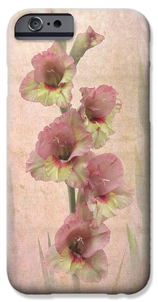 Gladiolas iPhone Cases - Summer Glad iPhone Case by Angie Vogel