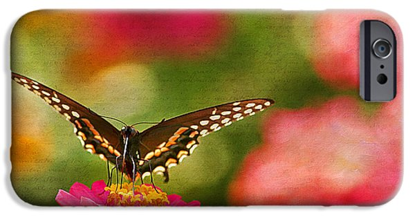 Blue Swallowtail iPhone Cases - Summer Grace iPhone Case by Darren Fisher