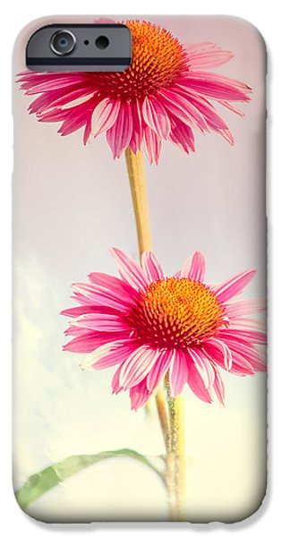 Cone Flower iPhone Cases - Summer Impressions Cone flowers iPhone Case by Bob Orsillo