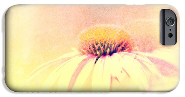 Cone Flower iPhone Cases - Summer In A Day iPhone Case by Bob Orsillo