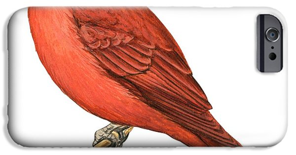 Zoology Paintings iPhone Cases - Summer tanager  iPhone Case by Anonymous