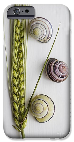 Agriculture iPhone Cases - Summer Treasures iPhone Case by Jan Bickerton