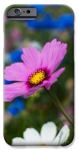 Summer Wild Blooms iPhone Case by Matt Malloy