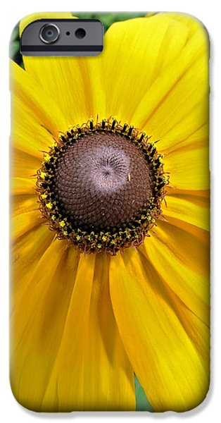 Summers Bloom iPhone Case by Susan Leggett