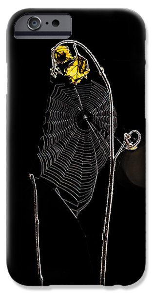 Summers Web Before Sunrise iPhone Case by Bob Orsillo