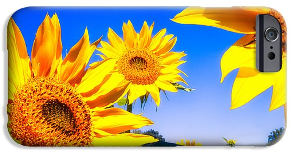 Sunflowers Photographs iPhone Cases - Summertime Sunflowers iPhone Case by Bob Orsillo