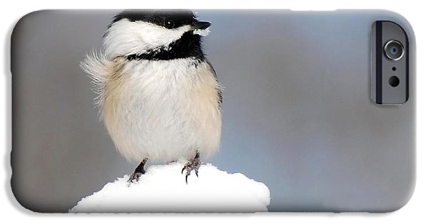 Chickadee iPhone Cases - Summit - Black-Capped Chickadee iPhone Case by Christina Rollo