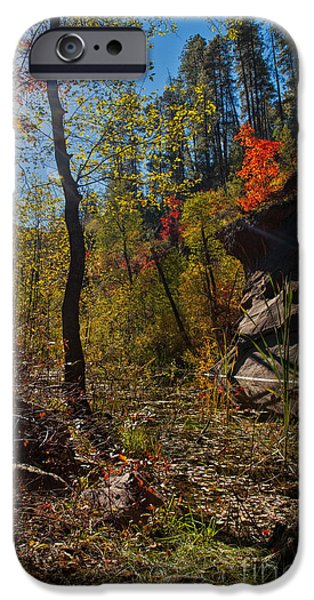 West Fork iPhone Cases - Sun and  the Tree iPhone Case by Brian Lambert