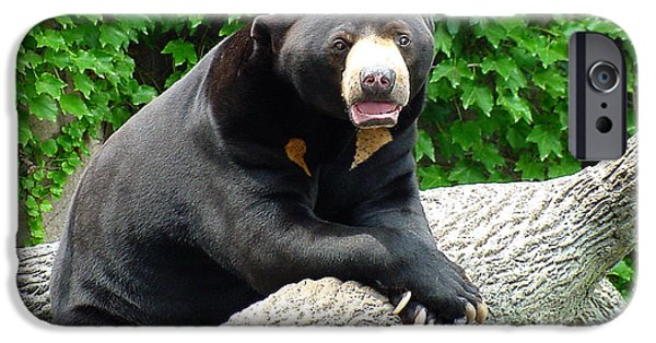 Gingrich Photography iPhone Cases - Sun Bear - 09515 iPhone Case by Gary Gingrich Galleries