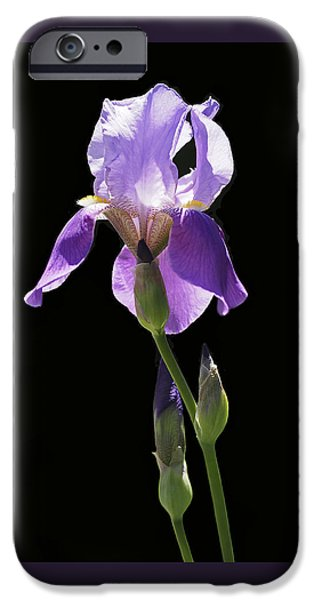 Decor iPhone Cases - Sun-drenched Iris iPhone Case by Rona Black