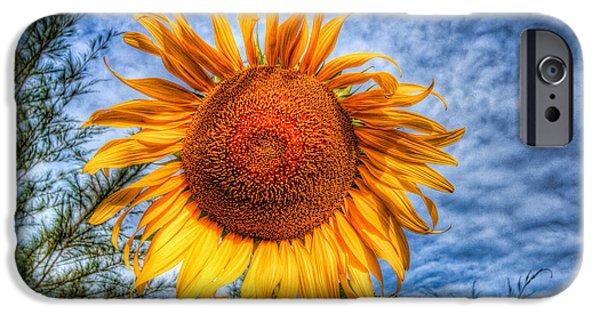 Stamen Digital iPhone Cases - Sun Flower iPhone Case by Adrian Evans
