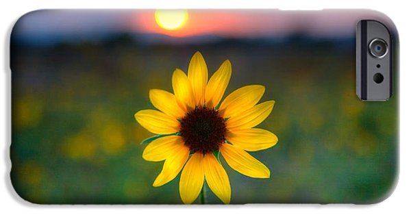 Floral Photographs iPhone Cases - Sun Flower IV iPhone Case by Peter Tellone