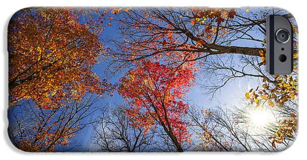 Fall iPhone Cases - Sun in fall forest canopy  iPhone Case by Elena Elisseeva