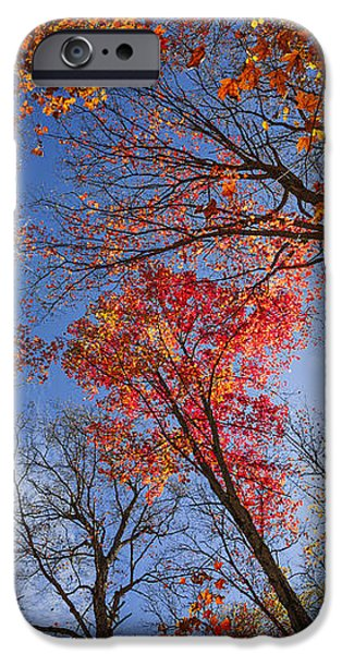 Sun in fall forest canopy  iPhone Case by Elena Elisseeva