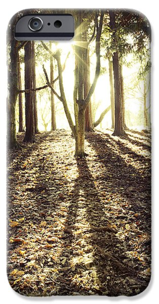 Beautiful Autumn Day iPhone Cases - Sun in trees iPhone Case by Les Cunliffe
