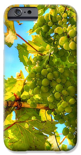 Sun kissed green grapes iPhone Case by Eti Reid