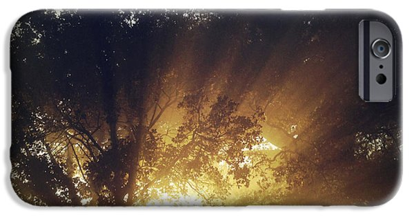 Forest iPhone Cases - Sun rays iPhone Case by Les Cunliffe