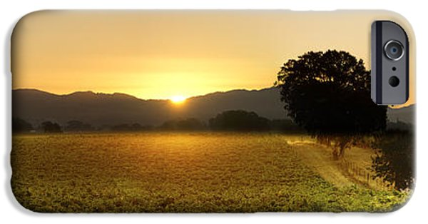 Mighty Oak iPhone Cases - Sun rise Sonoma iPhone Case by Stan Angel