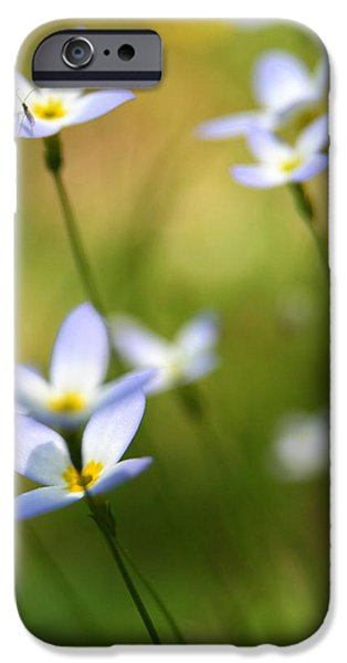 Sun Searching  iPhone Case by Neal  Eslinger