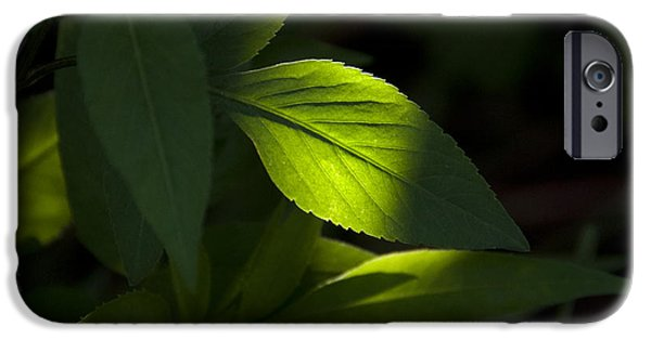 Philodendron iPhone Cases - Sun spot on green leaves. iPhone Case by Roy Thoman