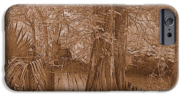 Chiefland iPhone Cases - Sun through Cypress Sepia iPhone Case by Sheri McLeroy