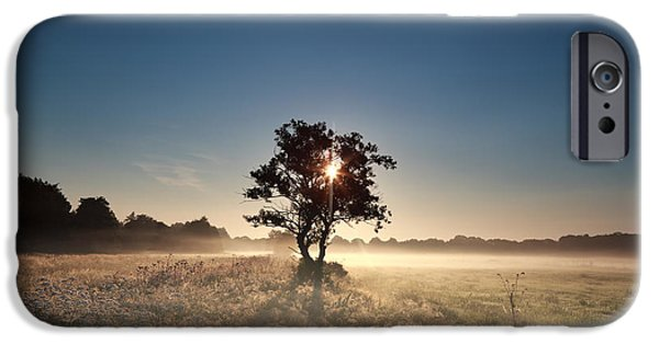 Fog Mist iPhone Cases - Sunbeams Through Tree During Misty Morning iPhone Case by Olha Rohulya