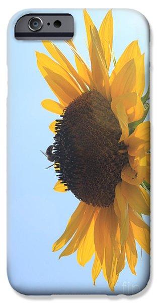 Lotus iPhone Cases - SunBee iPhone Case by Lotus
