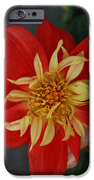 Bloom Pyrography iPhone Cases - Sunburst iPhone Case by Carol  Eliassen