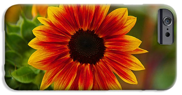 Pastel Pyrography iPhone Cases - Sunburst iPhone Case by Greg Brown