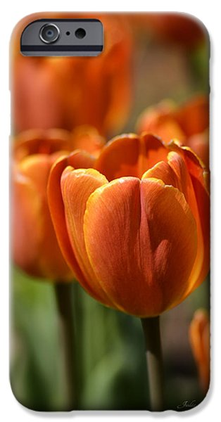 Sears Tower iPhone Cases - Sunburst Tulips iPhone Case by Julie Palencia