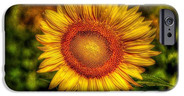 Stamen Digital iPhone Cases - Sunflower iPhone Case by Adrian Evans