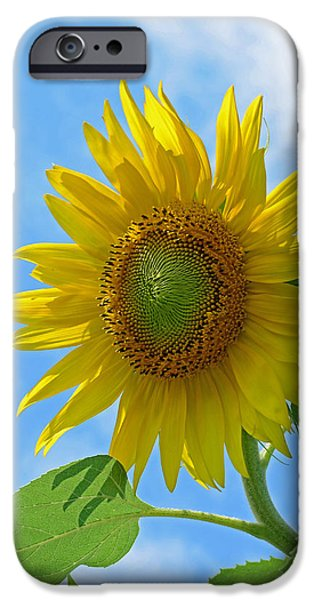 Flower Photographs iPhone Cases - Sunflower Against Blue Sky iPhone Case by Lisa  Phillips