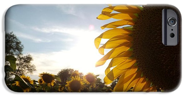 Buttonwood Farm iPhone Cases - Sunflower iPhone Case by Ashley Thompson