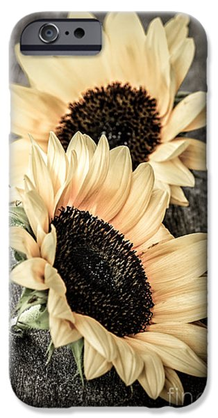 Vivid iPhone Cases - Sunflower blossoms iPhone Case by Elena Elisseeva