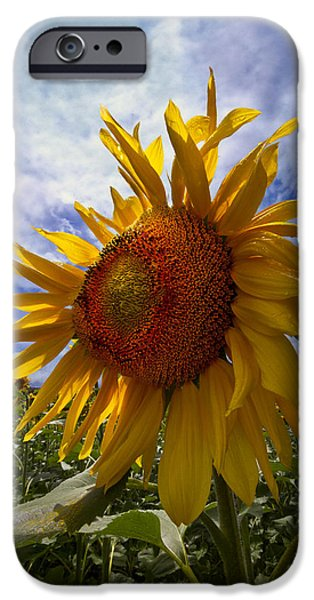 Forest iPhone Cases - Sunflower Blue iPhone Case by Debra and Dave Vanderlaan