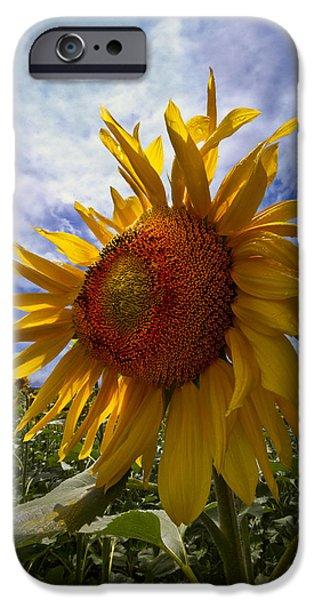 Sunflower Blue iPhone Case by Debra and Dave Vanderlaan