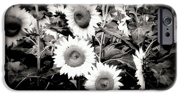 Girasol iPhone Cases - Sunflower Cinema in Black and White iPhone Case by Janine Riley