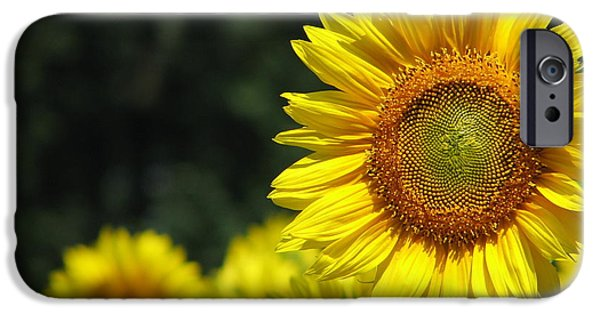 Buttonwood Farm iPhone Cases - Sunflowers Closeup 3 iPhone Case by Tammie Miller