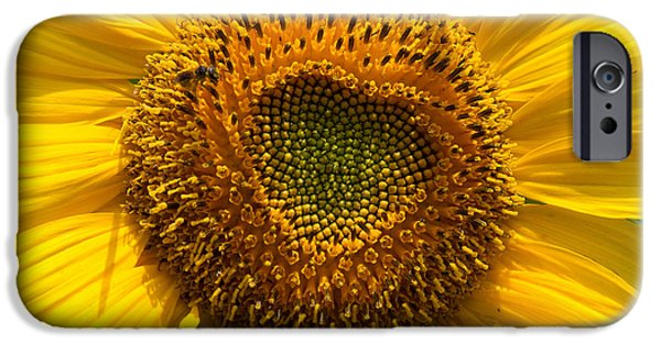 Asymmetrical iPhone Cases - Sunflower Closeup iPhone Case by Sue Karski