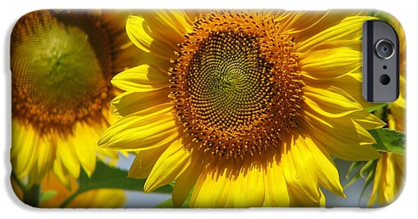 Buttonwood Farm iPhone Cases - Sunflower Closeup iPhone Case by Tammie Miller