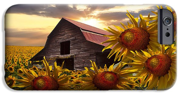Old Barns iPhone Cases - Sunflower Dance iPhone Case by Debra and Dave Vanderlaan