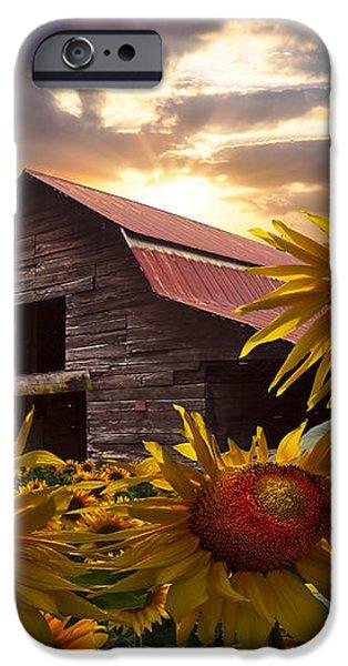 Sunflower Dance iPhone Case by Debra and Dave Vanderlaan