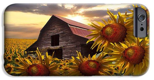 Swiss iPhone Cases - Sunflower Dance iPhone Case by Debra and Dave Vanderlaan